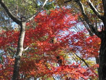 石老山の紅葉