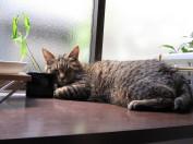 植木鉢を枕に寝るちびちょん