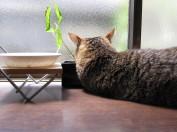 寝返りを打っても植木鉢を枕に寝るちびちょん